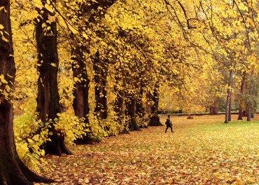 Rhys-Autumn-colours